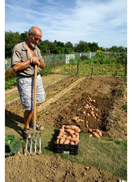 arracher pomme de terre mildiou