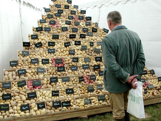 Le choix des vari t s il y en a pour tous les go ts le plant fran ais de pomme de terre - Tableau pomme de terre varietes ...