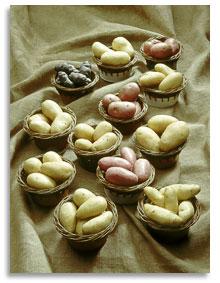 le plant fran ais de pomme de terre choisir les vari t s le plant fran ais de pomme de terre. Black Bedroom Furniture Sets. Home Design Ideas