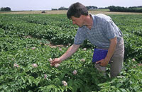 Contrôle d'un champ de pomme de terre