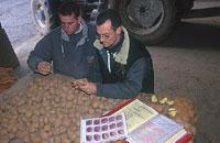 Contrôle sanitaire des pommes de terre