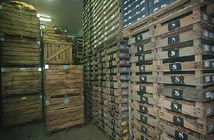Stockage pour la conservation des plants de pomme de terre
