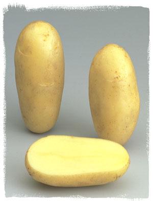 Vari t amandine le plant fran ais de pomme de terre - Variete pomme de terre rouge ...