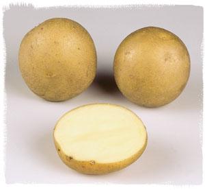 Vari t carrera le plant fran ais de pomme de terre - Tableau pomme de terre varietes ...