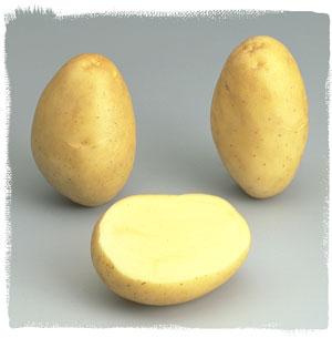 Vari t monalisa le plant fran ais de pomme de terre - Variete pomme de terre rouge ...